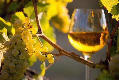 Les atouts des vins de CÔTES DE GASCOGNE