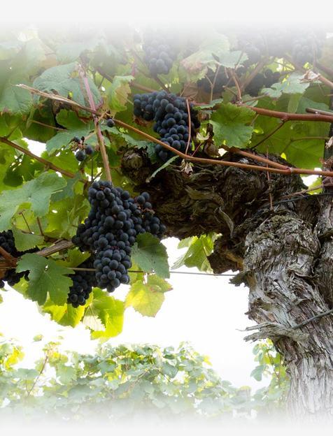 Tradition & passion du vin